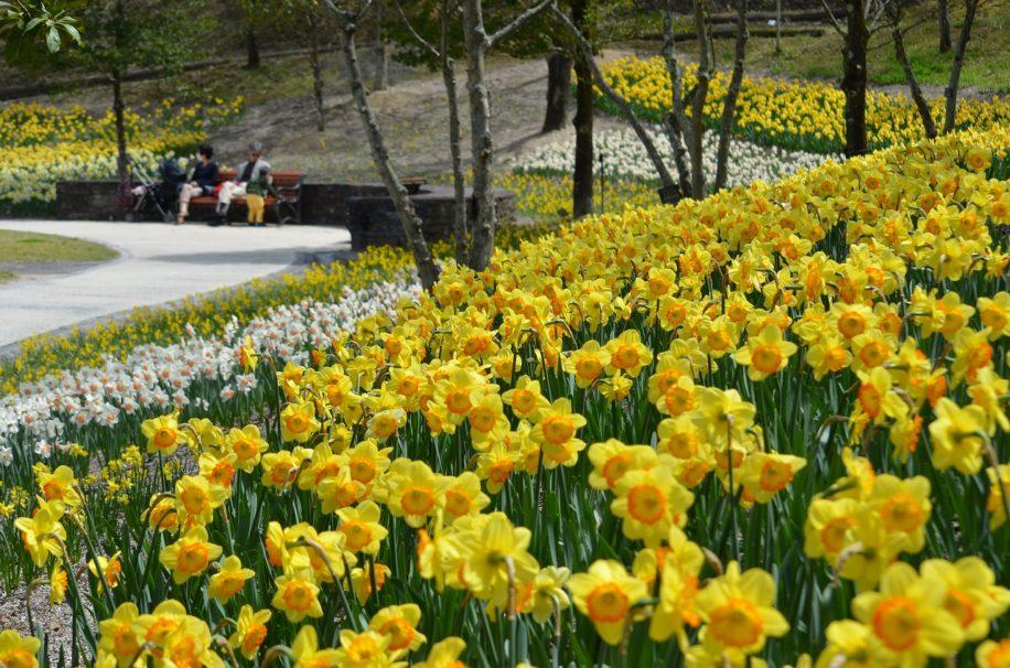 鮮やかな花と熱きチャンバラの共演 | 花フェスタ春の陣